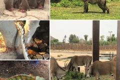 dubai safari park contact number