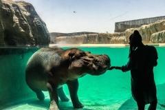 dubai safari park al warqa