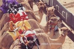 Camel Form Dubai
